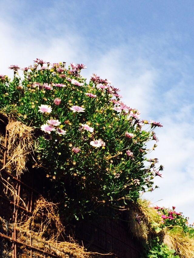 Muro natural
