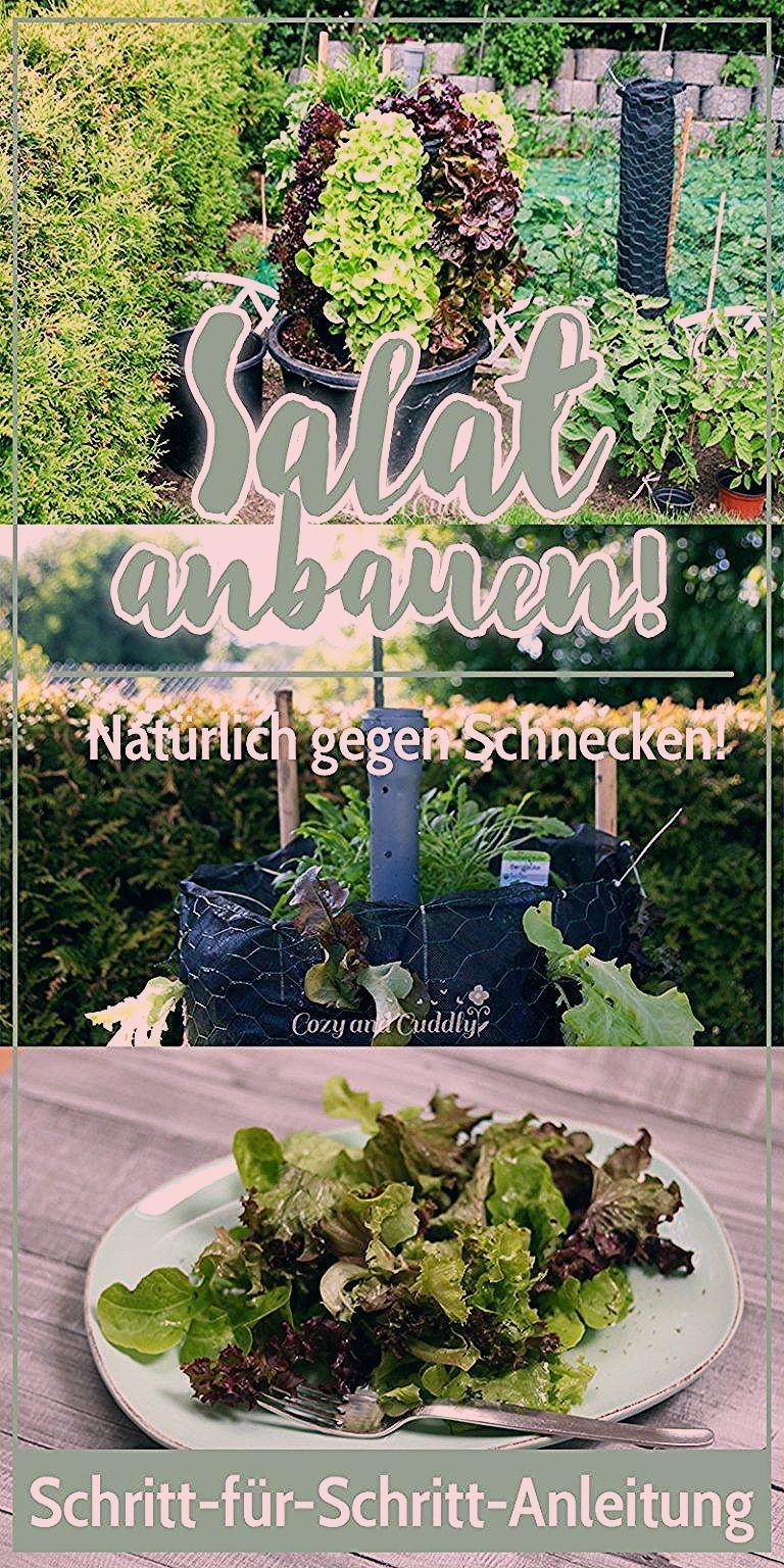 Photo of Schnecken natürlich bekämpfen- Salat aus dem Garten im Salat-Turm. Anleitung