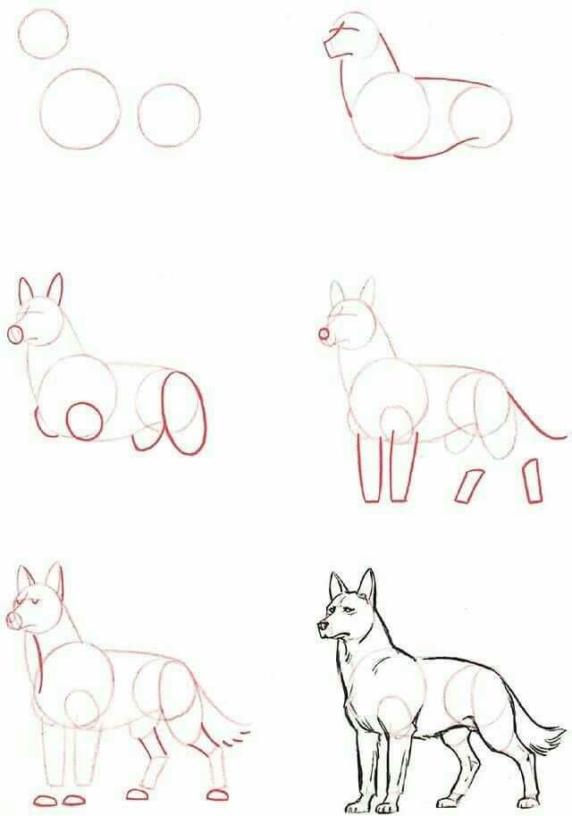 Pin von Monikinshi auf Animal anatomy | Pinterest