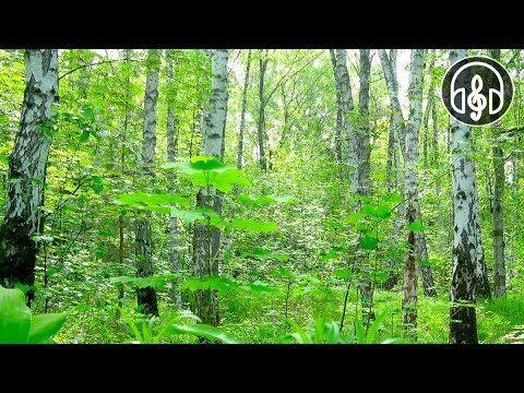 Утренние звуки леса и пение птиц. 3 Часа для медитации ...