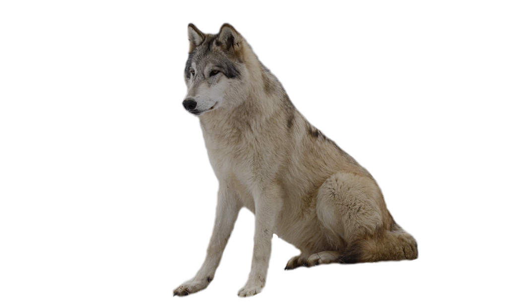 png wolf - Buscar con Google