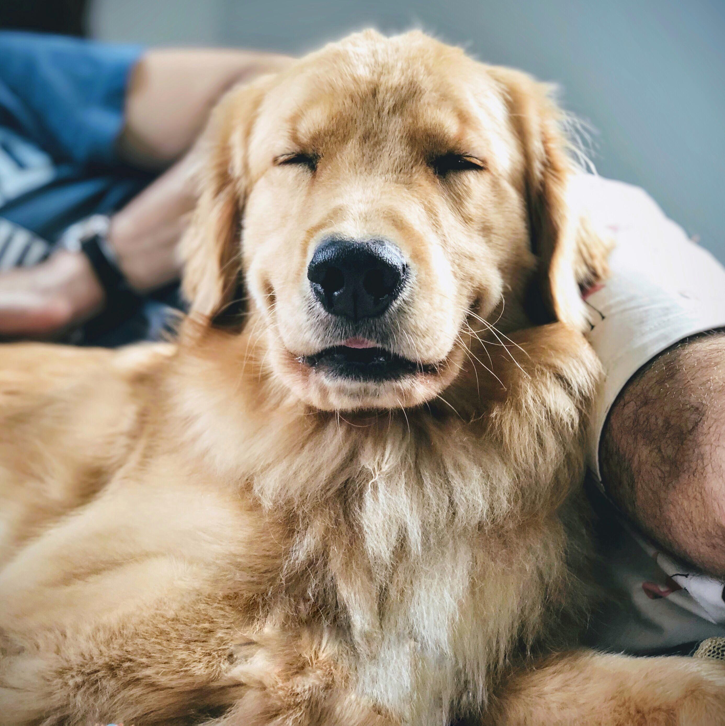 Pin Von Len Hnsl Auf Dogs Susse Hunde Tiere Hund Und Hunde