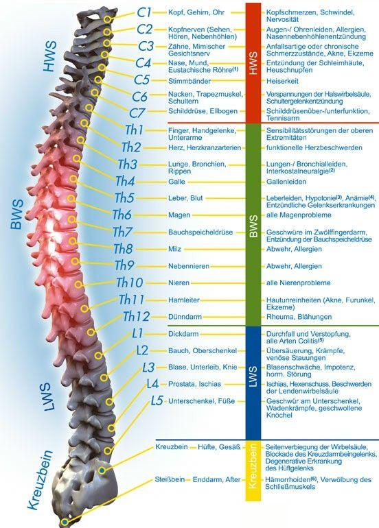 wirbelsäule - Google-Suche | Wissen | Pinterest | Anatomie, Therapie ...