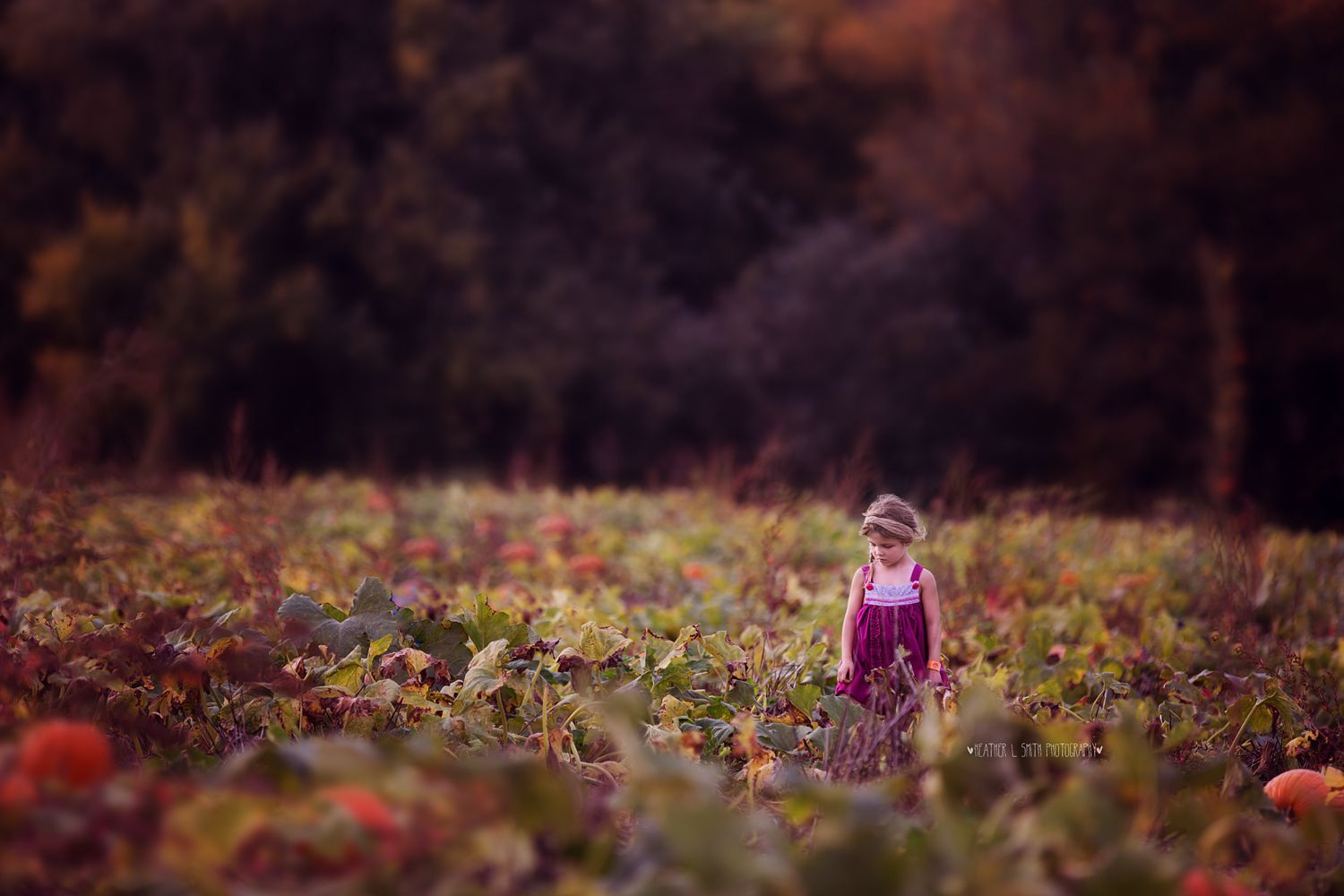 Pumpkin Search by Heather Smith on 500px | life in photo | Pinterest