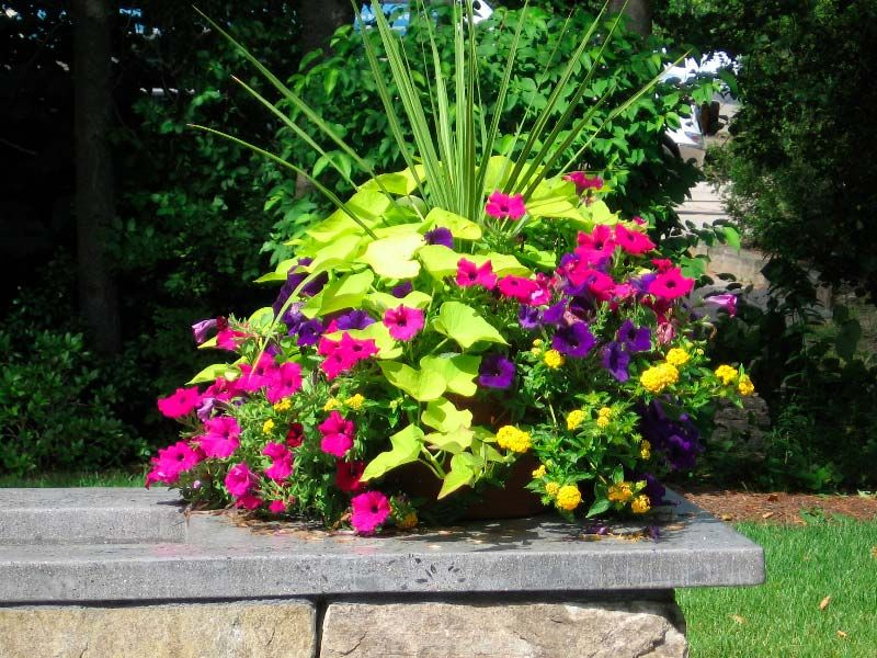Pin By Kerry Baker On Container Gardening Backyard Garden