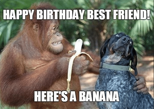 50 Funny Happy Birthday Memes Images Quotes Funny Happy Birthday Meme Happy Birthday Best Friend Best Friend Meme