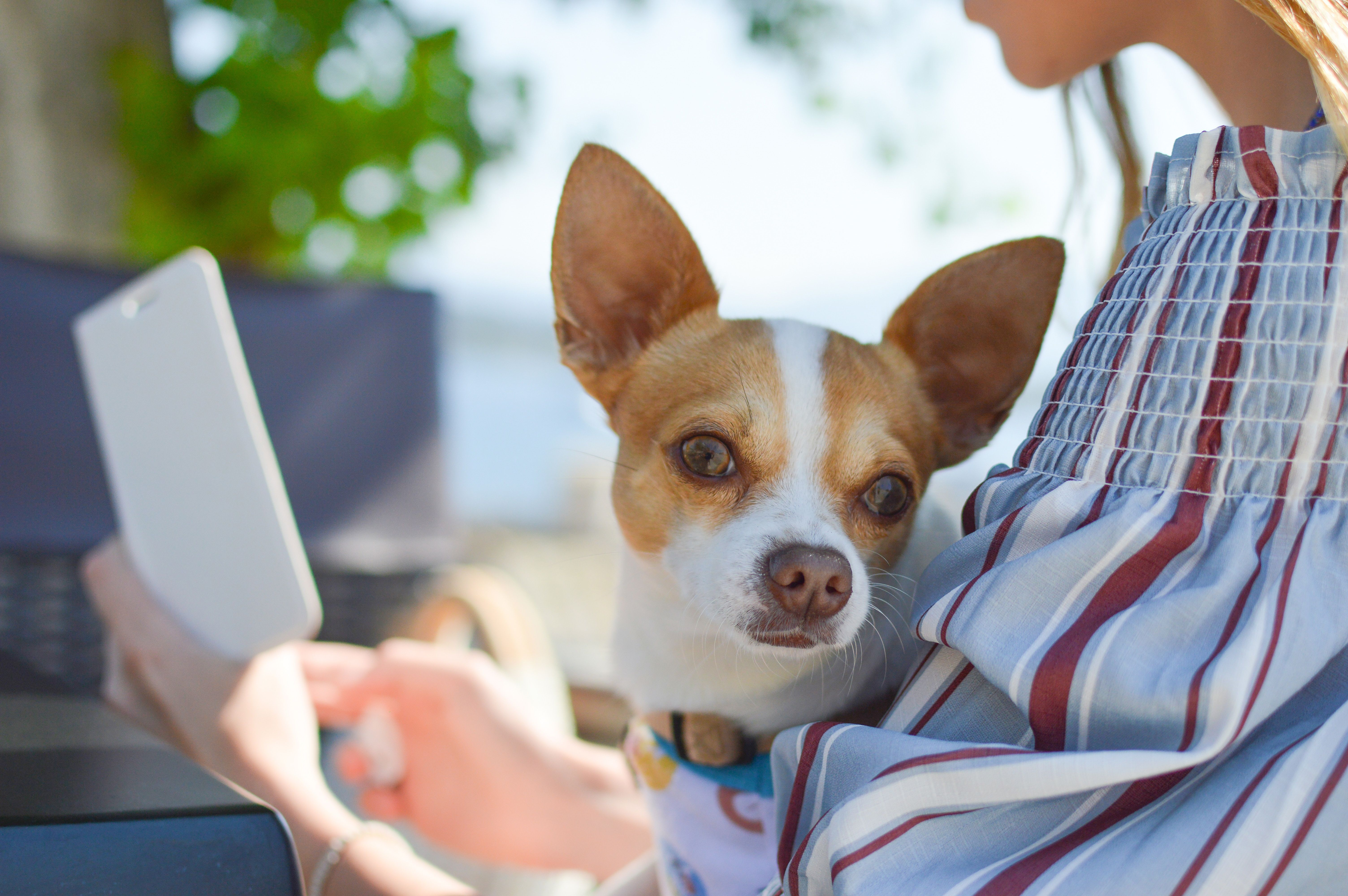 Join a community of people who are passionate about pets