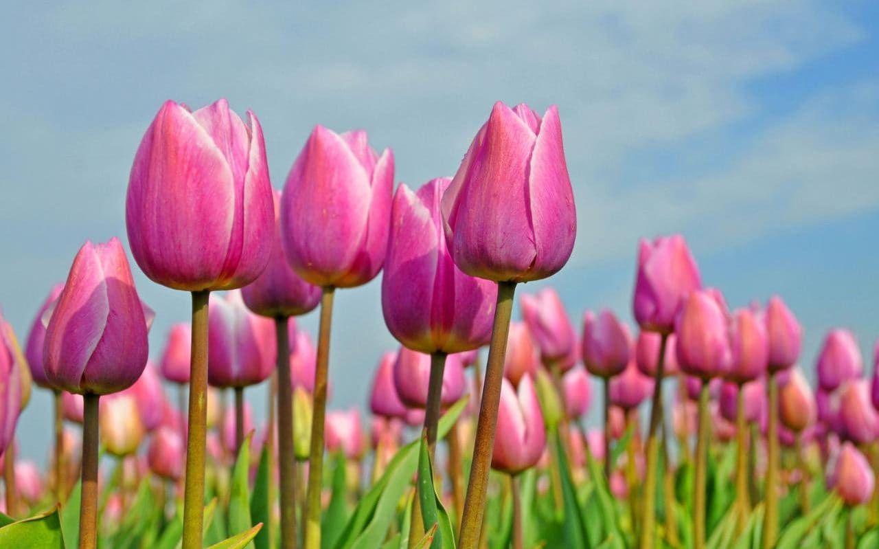 Top 25 Spring Plants Garden Pinterest Spring Plants Plants