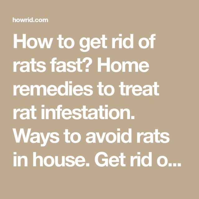 How to Get Rid of Rats Fast? | Mice away | Getting rid of rats, Rat