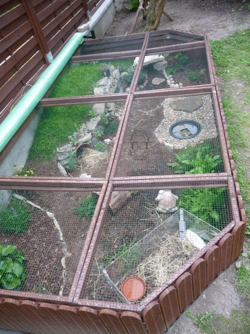 exemples enclos pour bebes ou juveniles terra pinterest outdoor tortoise enclosure. Black Bedroom Furniture Sets. Home Design Ideas