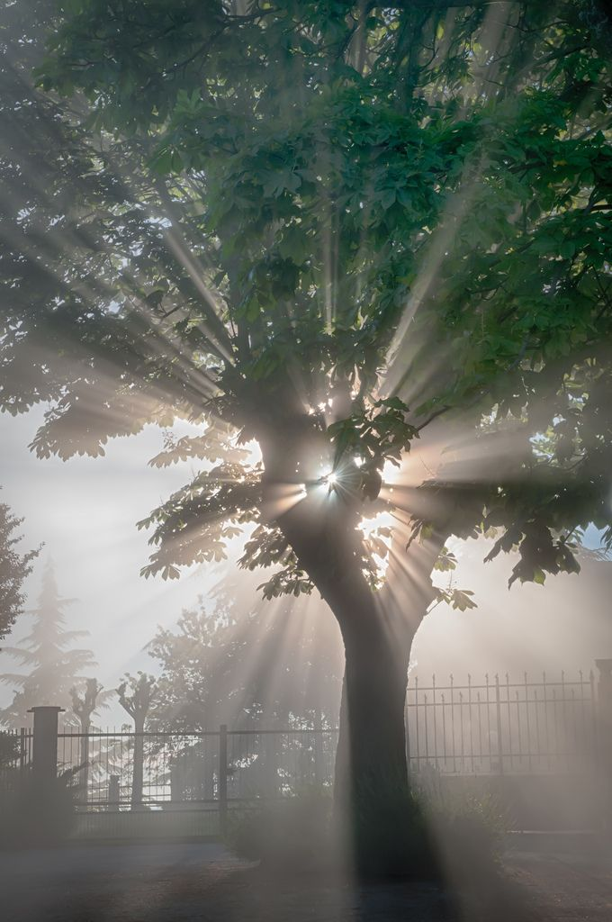 Brilliant White Light Streams Through The Green Tree S Branches Burning Off The Gray Fog In The Old Church Cemete Beautiful Nature Nature Nature Photography