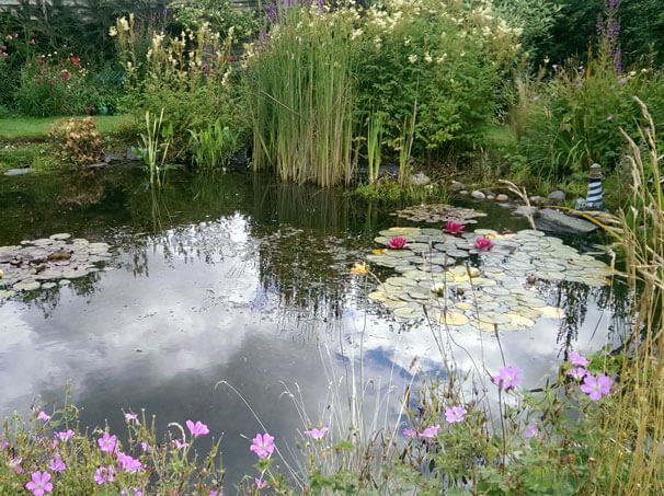 Waterside Nursery Pond Landscaping Bog Garden Water Pond