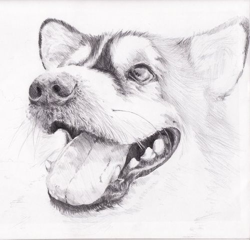 3d Cool And Drawing Image Pencil Drawings Of Animals Dog