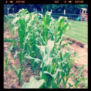 2 Years in Pictures - Elston Backyard Farms