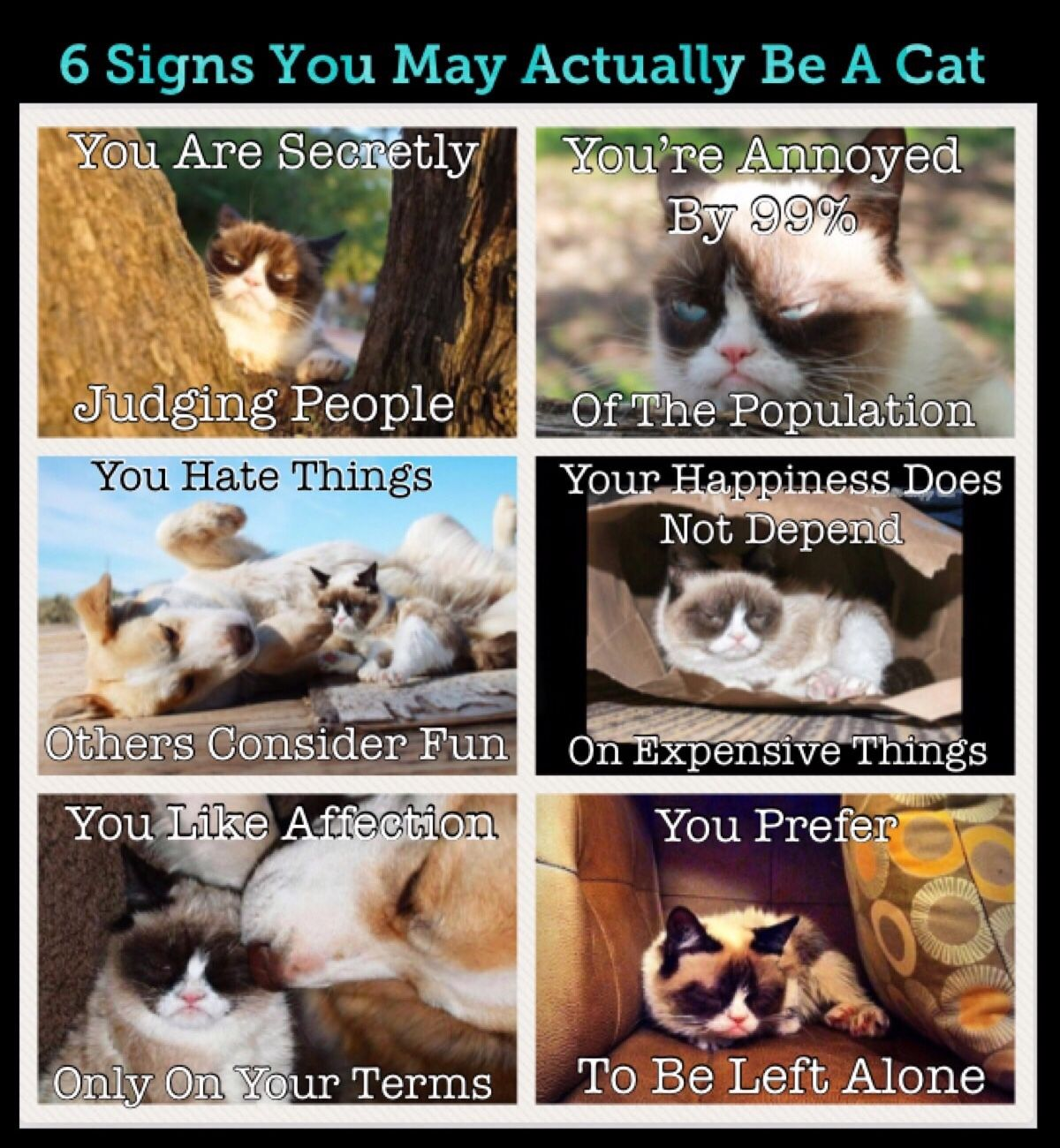 Grumpy Cats 6 Signs That You May Actually Be A Cat Grumpy Cat Cat Love Cats