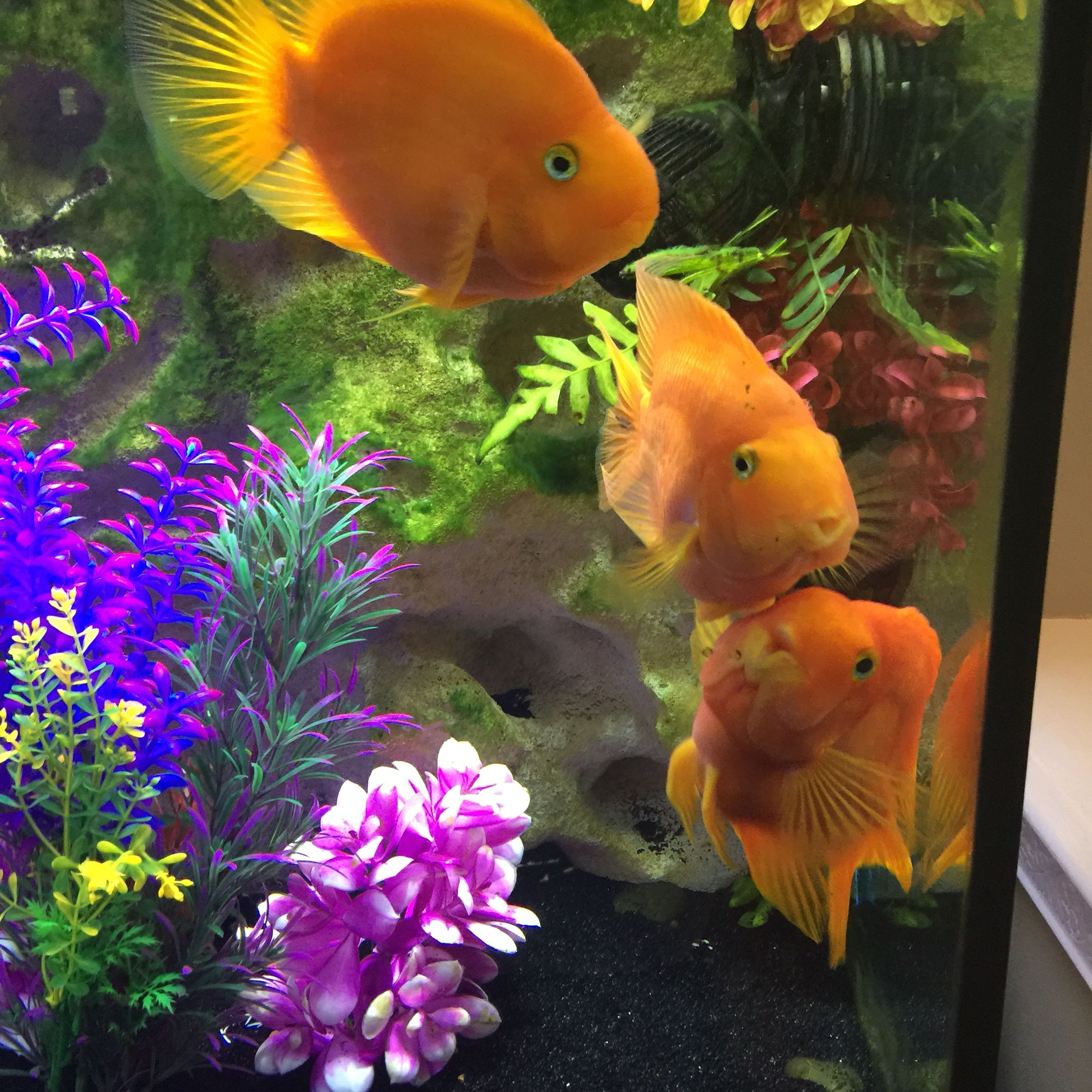 The Ultimate Guide To Modern Contemporary Fish Tanks With Big Style Fish Pet Fish Diy Stuffed Animals