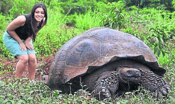 Ecuador: Declaran salvadas de la extinción a las tortugas gigantes de Galápagos