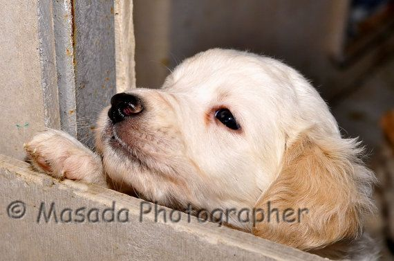 Puppy Photo Puppy Picture Baby Animal by MyNaturalPhotos on Etsy