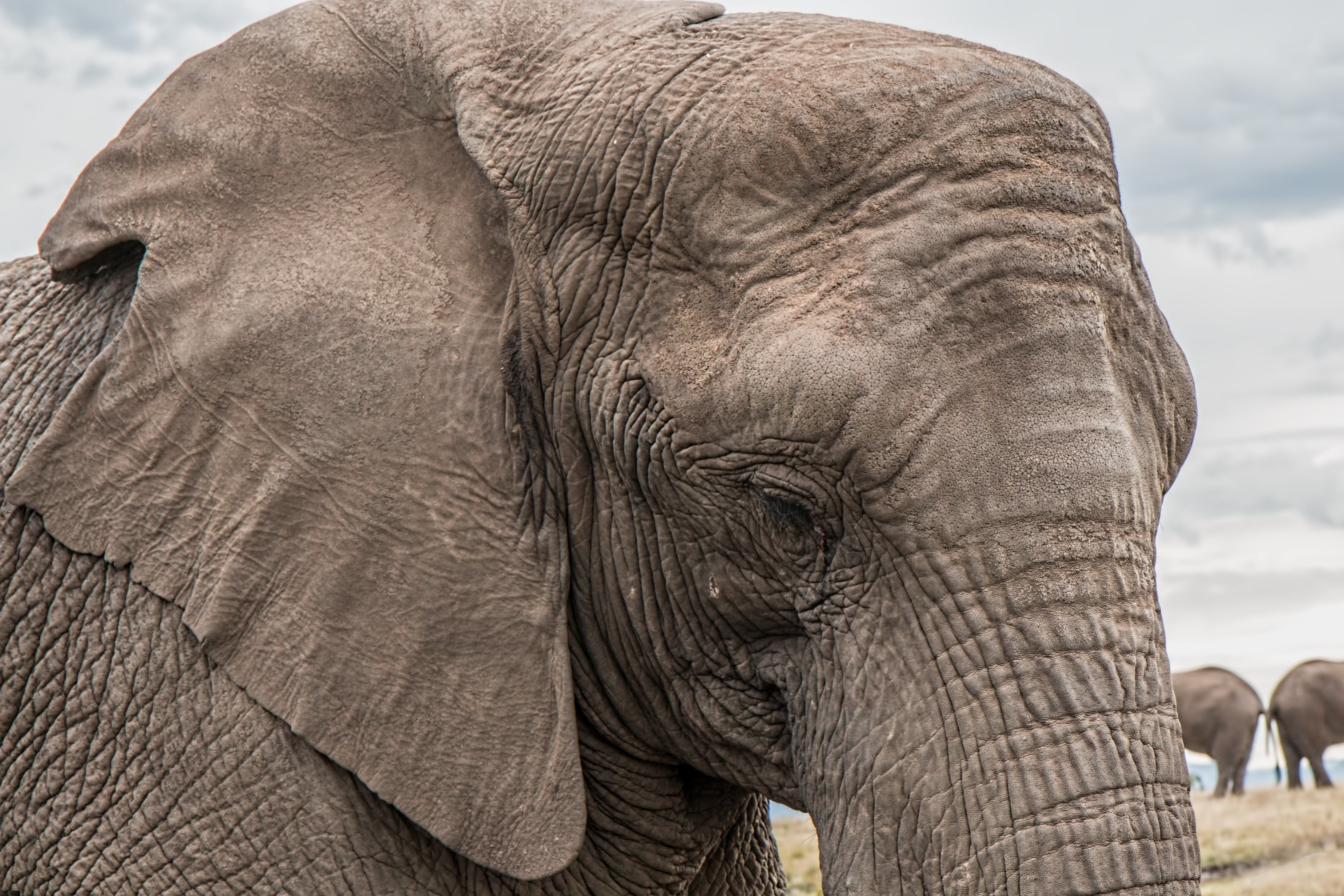 Must see Wallpaper High Quality Elephant - 078f64d999590db7ac5396824b60222c  Pic_463961.jpg