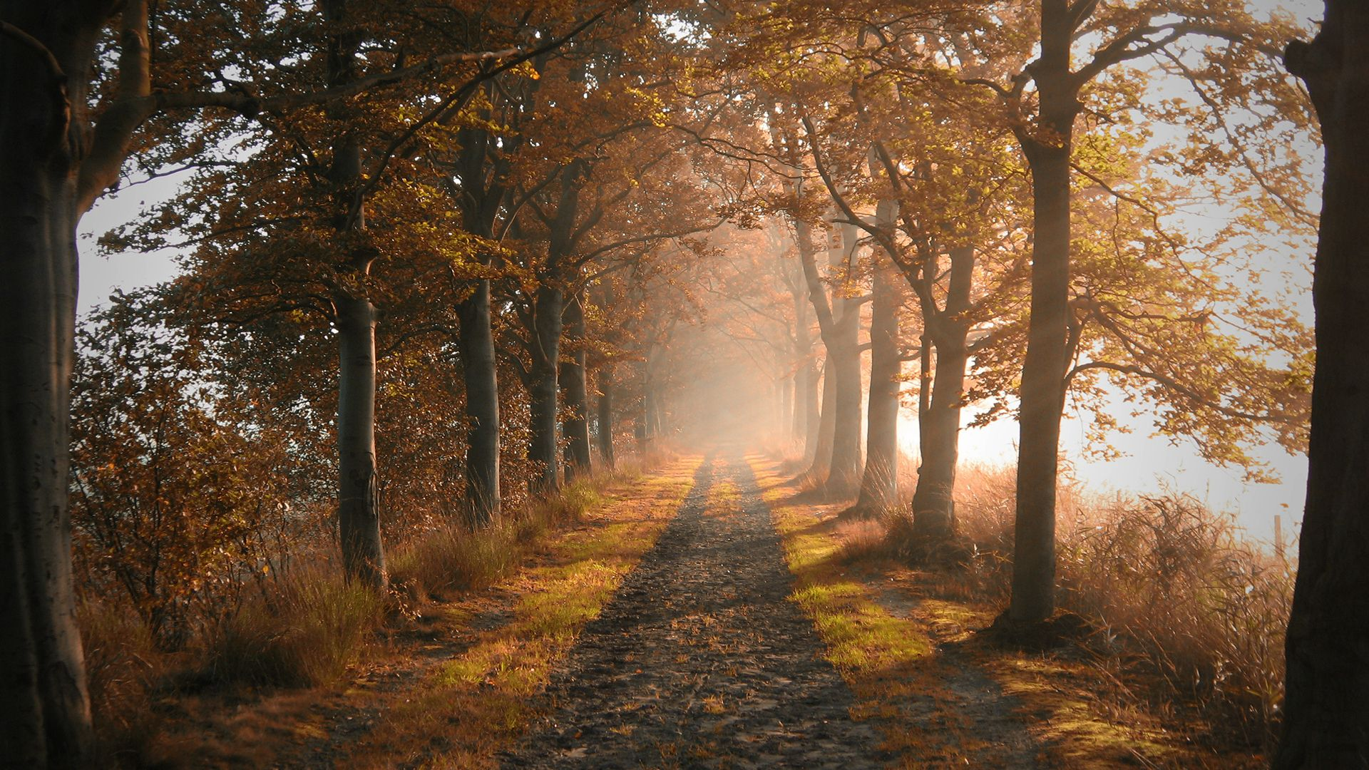 New Beautiful Path Wallpapers View #748484 Wallpapers | RiseWLP
