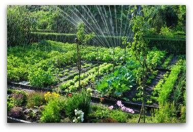 Large Vegetable Garden Plan … Garden Layout Vegetable 400 x 300