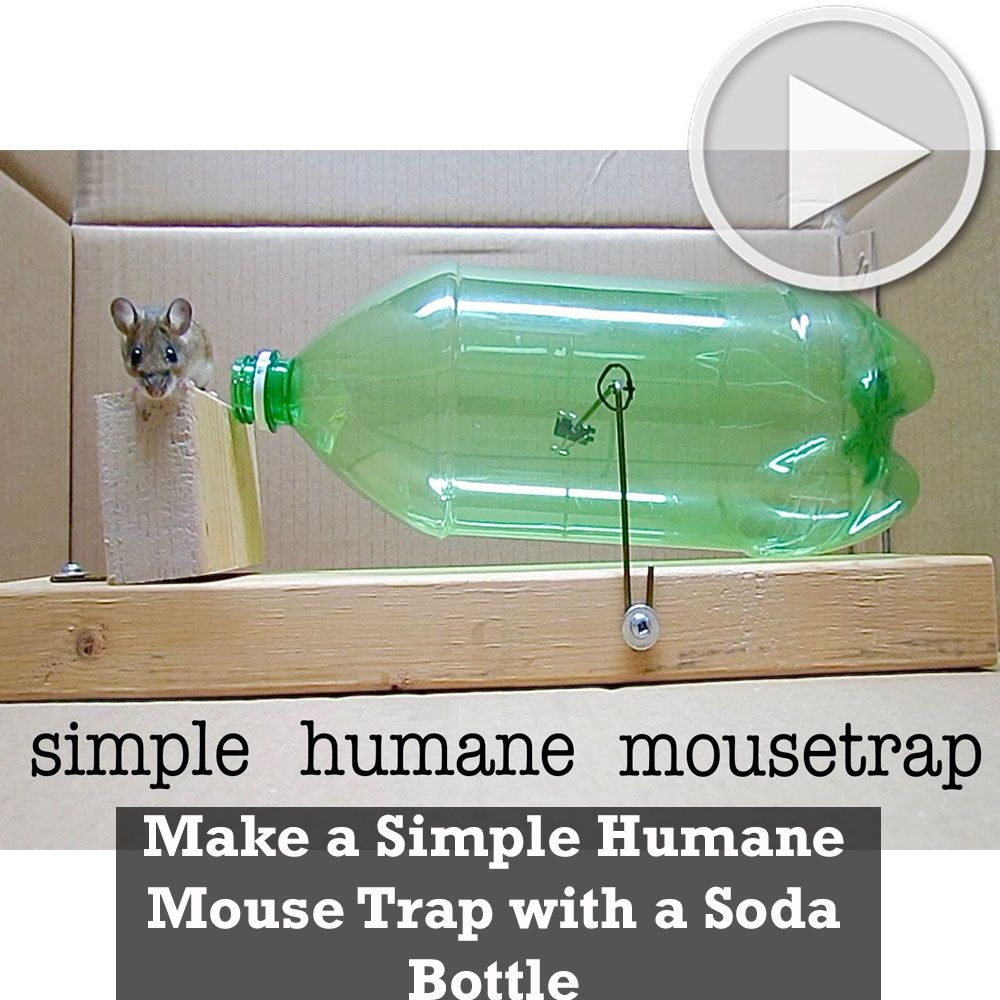 make a simple humane mouse trap with a soda bottle mouse trape in