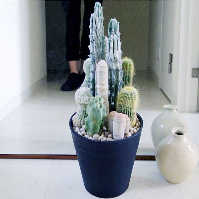 cactus set 福祿壽