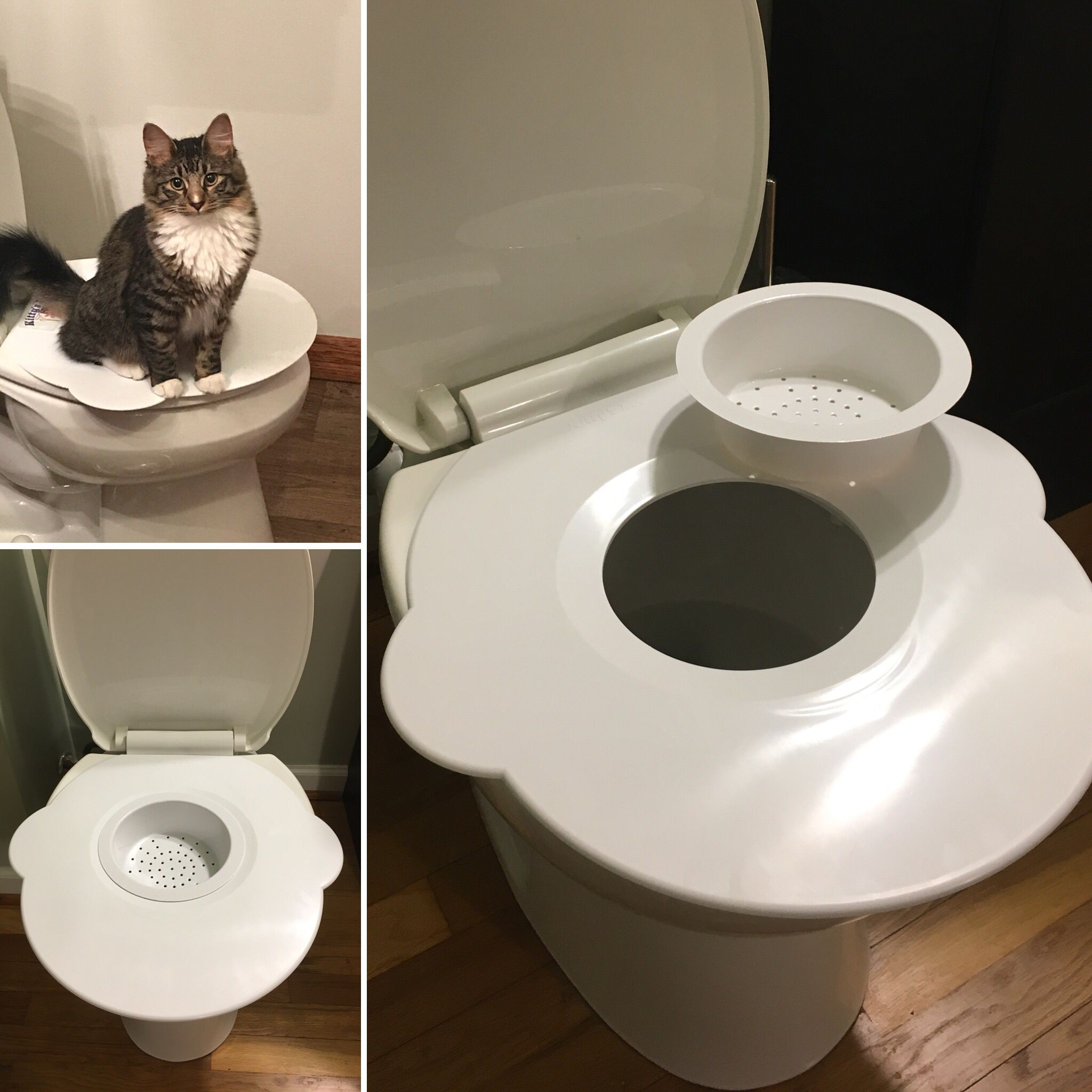 Pin On Kitty S Loo Purrfect Potty