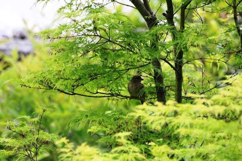Realizzazione giardini milano impianti di irrigazione manutenzione