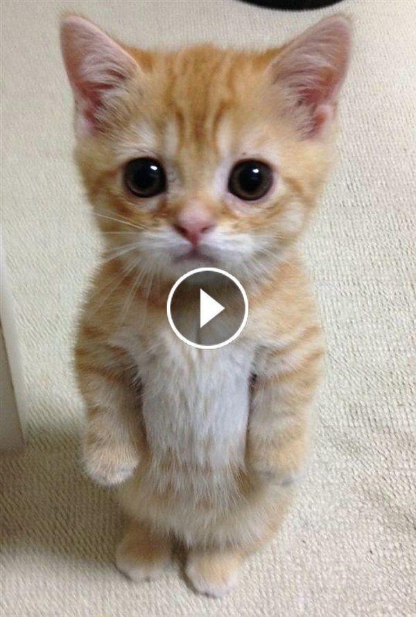 Pin Em Sweet Kitty Cats
