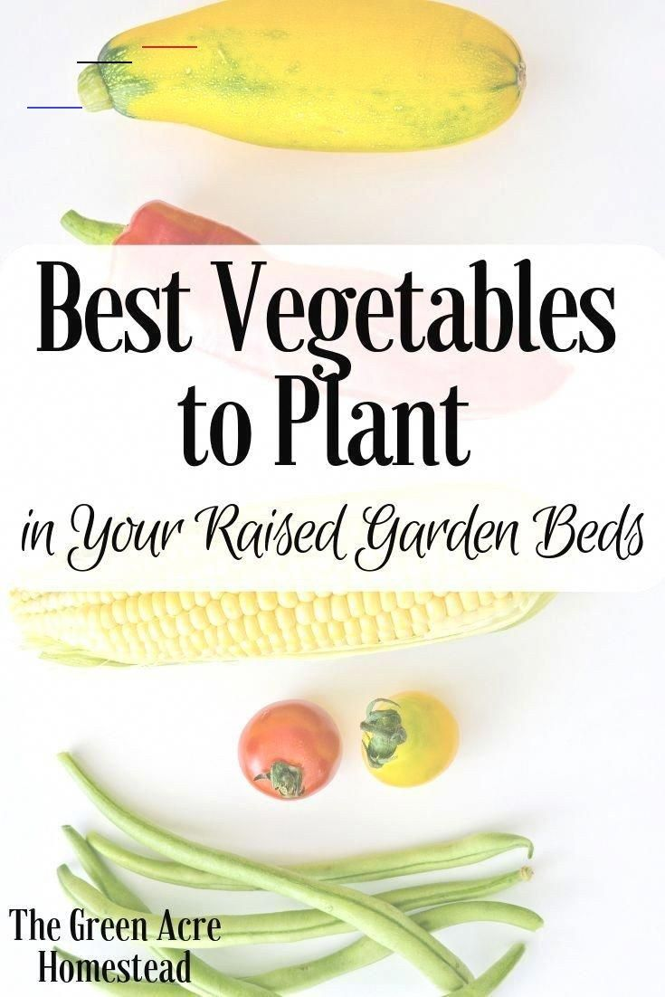 Best Vegetables For Raised Garden Beds The Green Acre