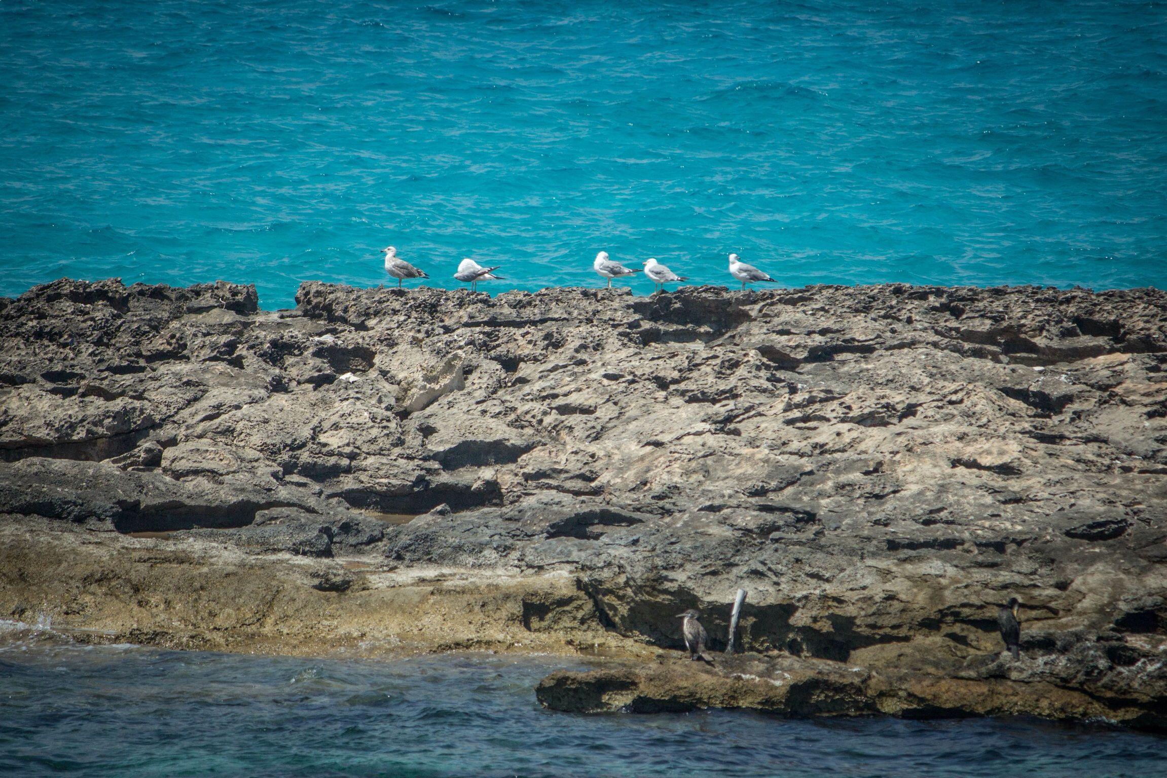Color of Formentera