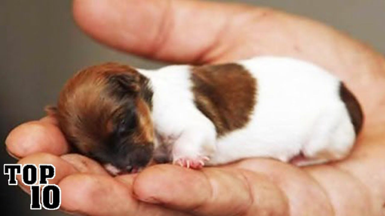 11++ What is the smallest animal in the world images