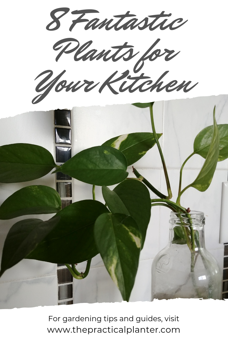 8 Fantastic Plants For Your Kitchen Or Bathroom Countertop