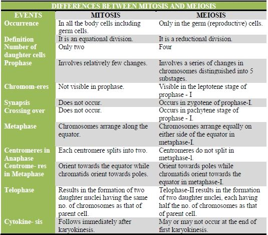 meiosis and mitosis similarities and differences - Google Search - new tabla periodica con sus valencias y familias