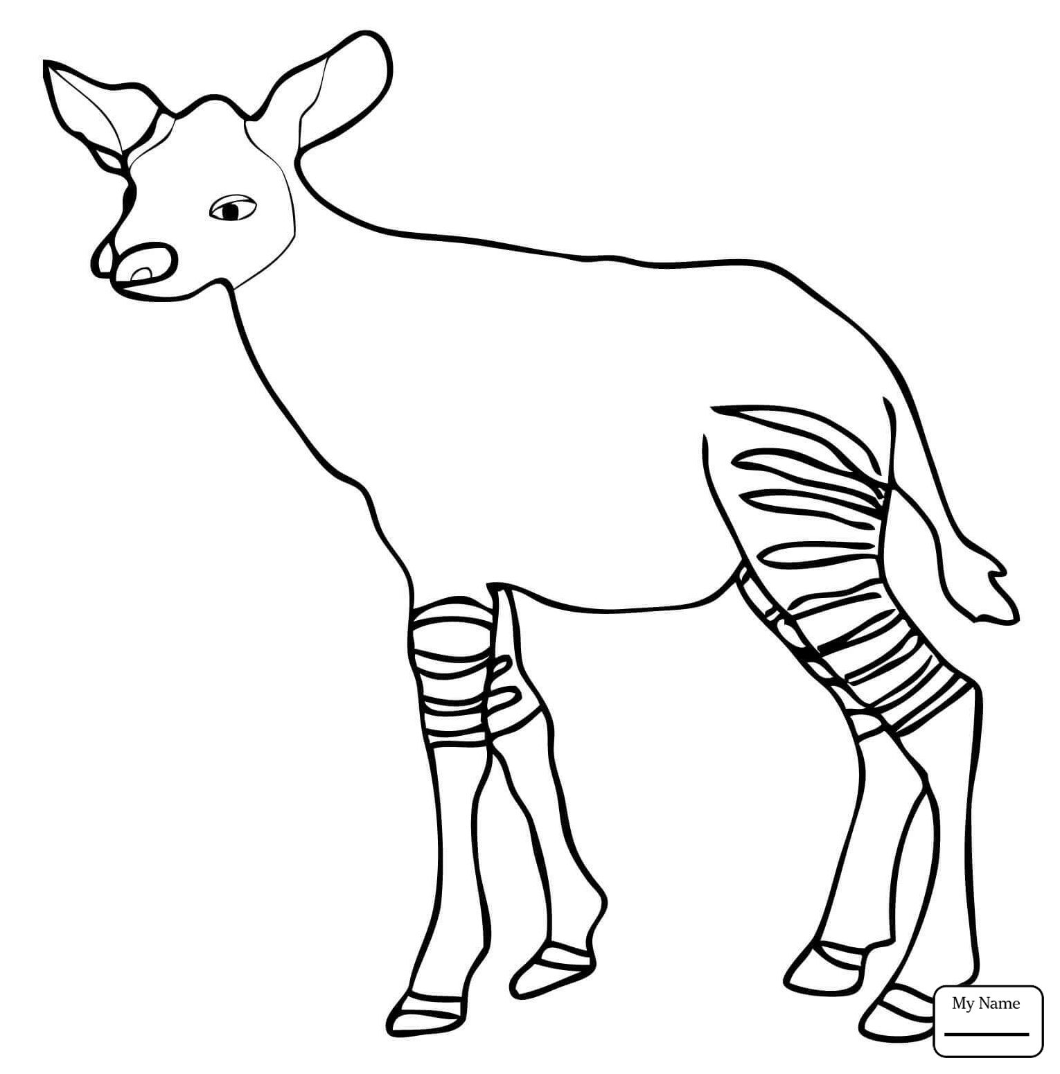Okapi Coloring Pages Download
