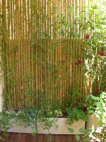 Macetas fibrocemento contra empalizada de bambu plantas - Jardineras con bambu ...