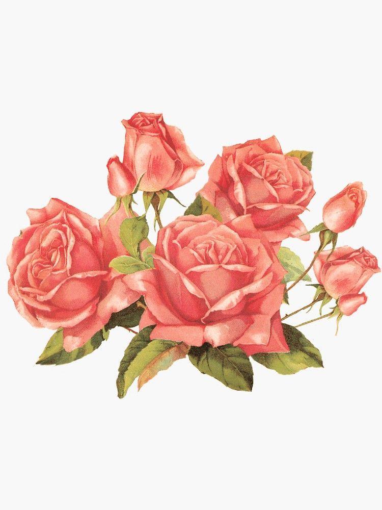 Roses Sticker Sticker By Elizaxgrey Elizaxgrey Roses Sticker In 2020 Vintage Roses Flower Art Vintage Flowers