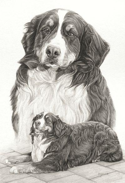 berner sennen hond in grafietpotlood hondenportret door