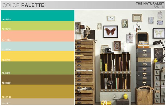 S Boys Trend Theme The Naturalist Color Board