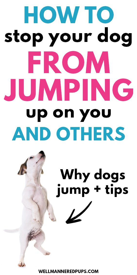 How to Stop Your Dog from Jumping Up On You and Ot