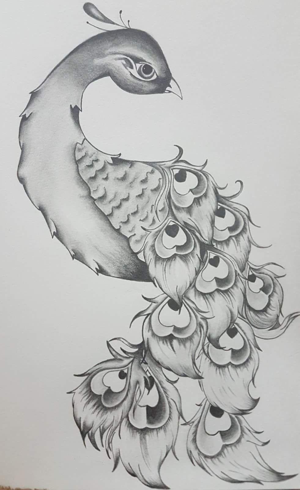 Peacock Pencil Sketch   Sketches, Bird art, Drawings