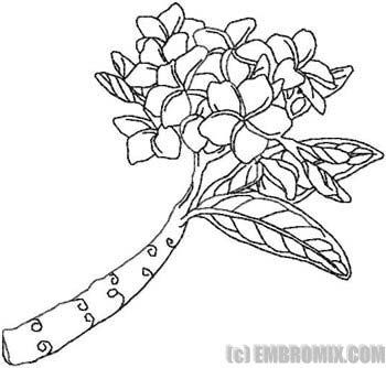Drawing Of Plumeria Tree Plumeria Embroidery Design Flower