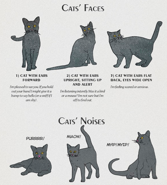 Cat behavior, noises and body language explained in this