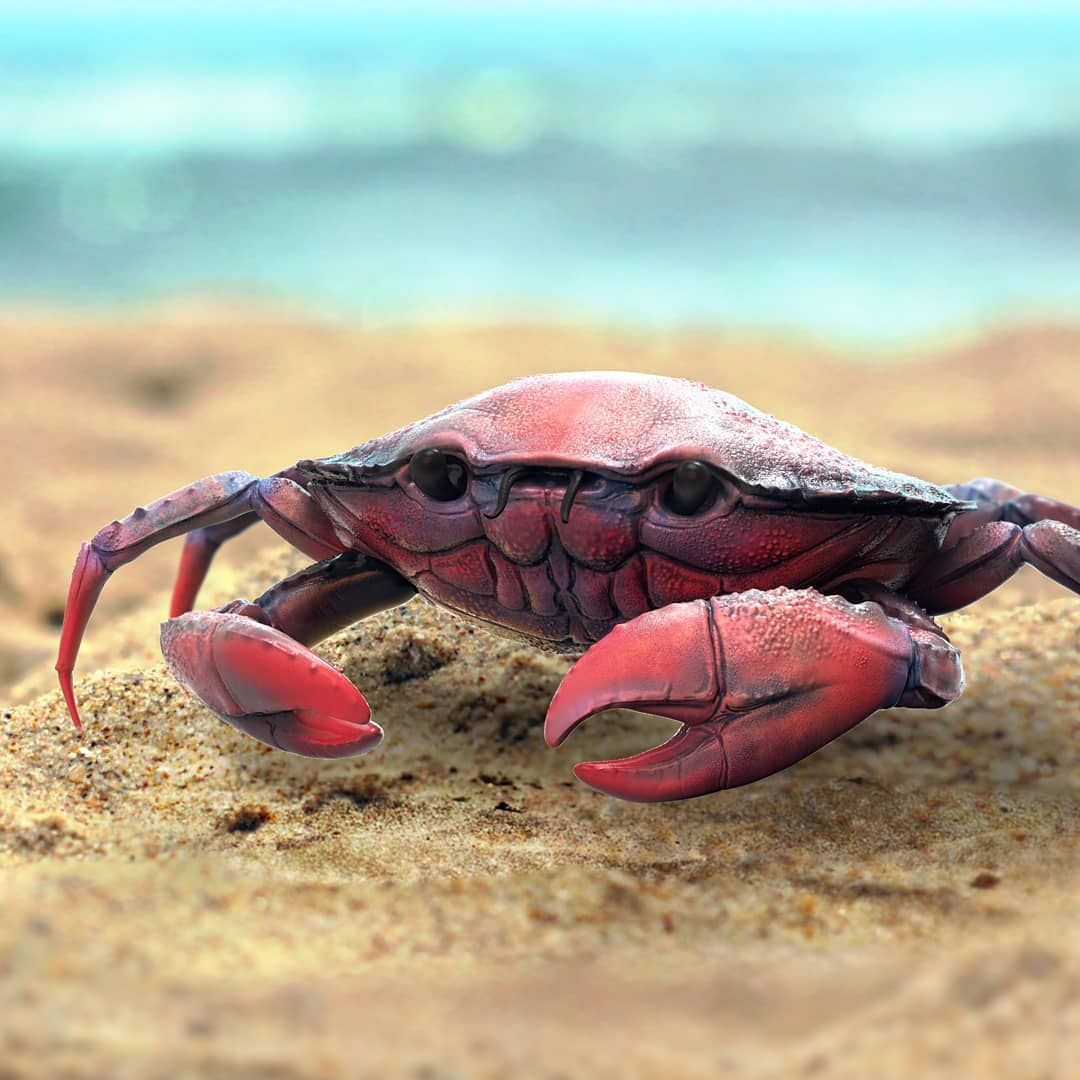 Daily sculpture - Crab #crab #keyshot #anatomy #study #cg #3d #cgi ...