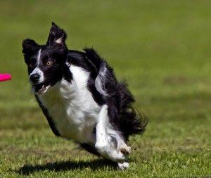 Boulder Dog Science Based Dog Training With Feeling 1 Dog