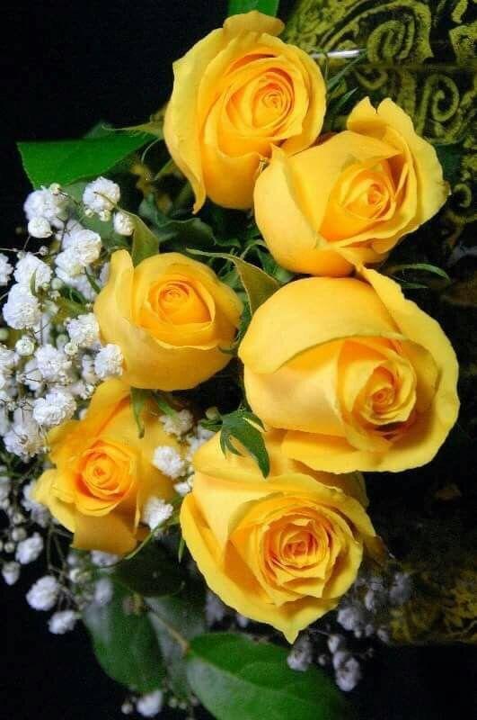 Rosas Amarillas Flowers And Beautiful Roses Yellow Roses