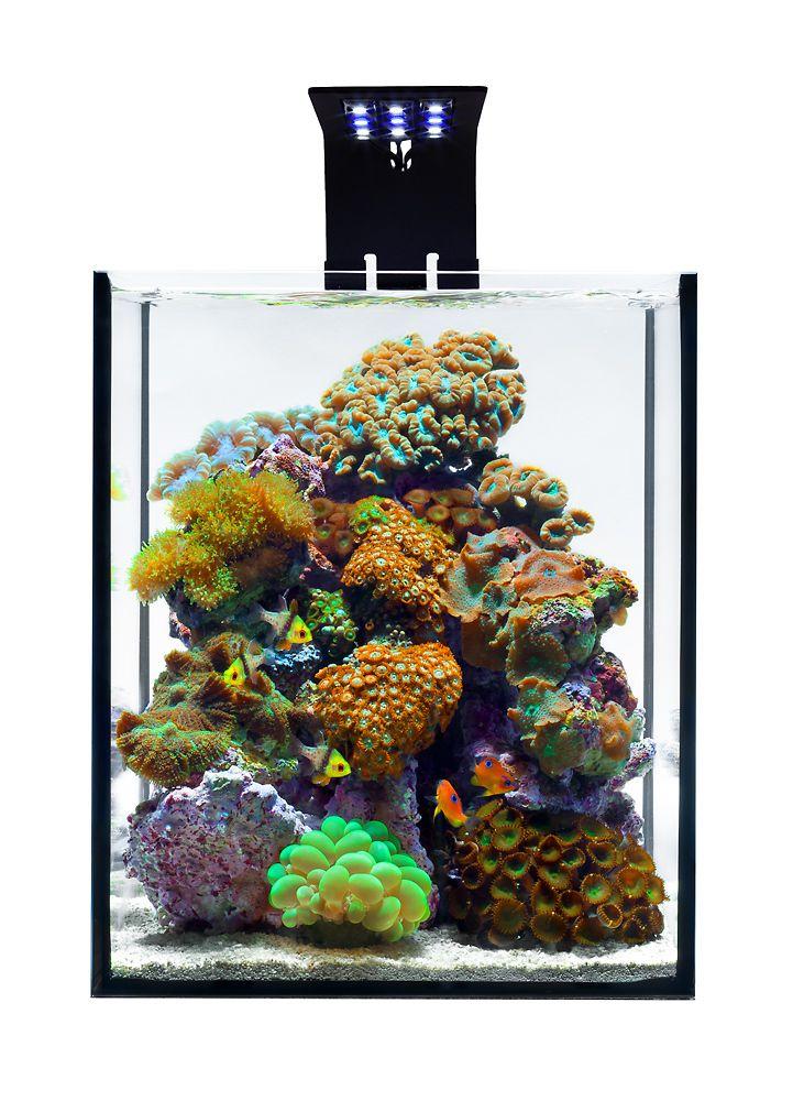 Aquarium Design Group   A Five Gallon Live Coral Reef Aquarium