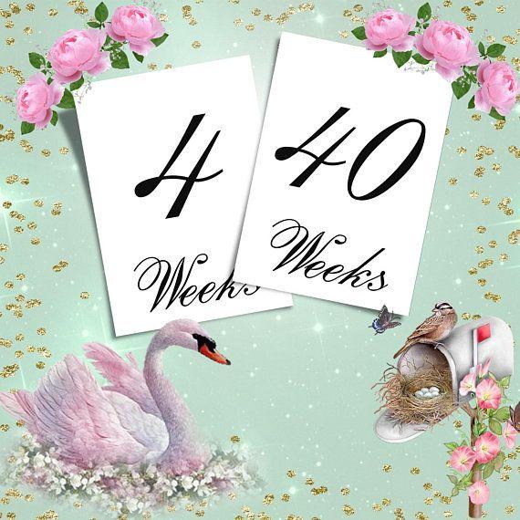 Set of Weekly Pregnancy Photo Prop 4-40 weeks Calendar count down
