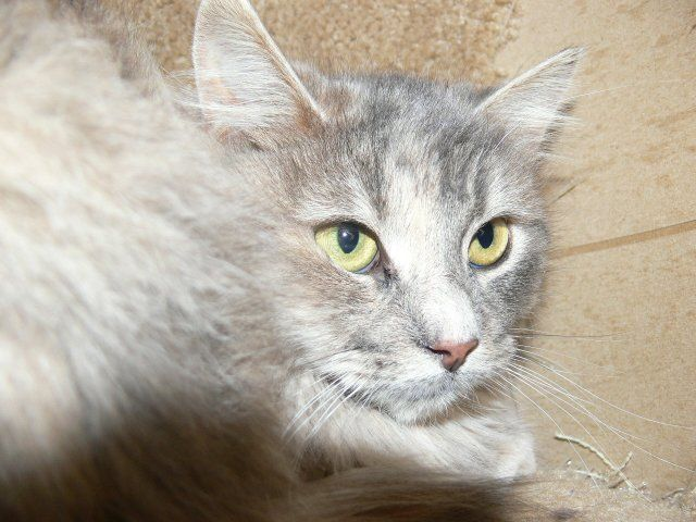 e9c56f530a Emily Carr from Hungry and Homeless Cat Rescue (Ottawa ON)